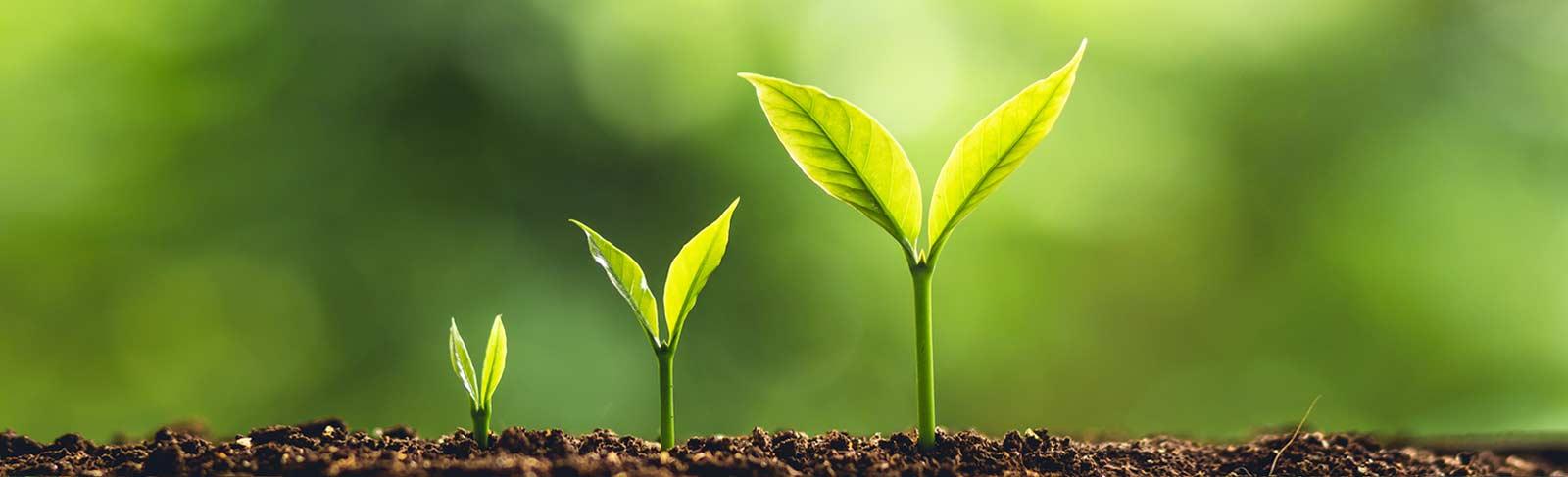 Pflanzen im Wachstum