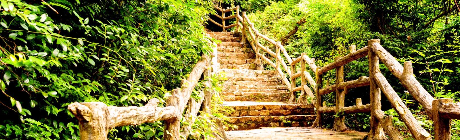 Holztreppe im Wald