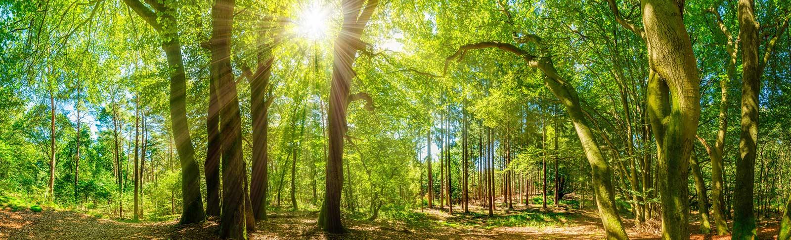 entspannt bei Sonnenschein im Wald