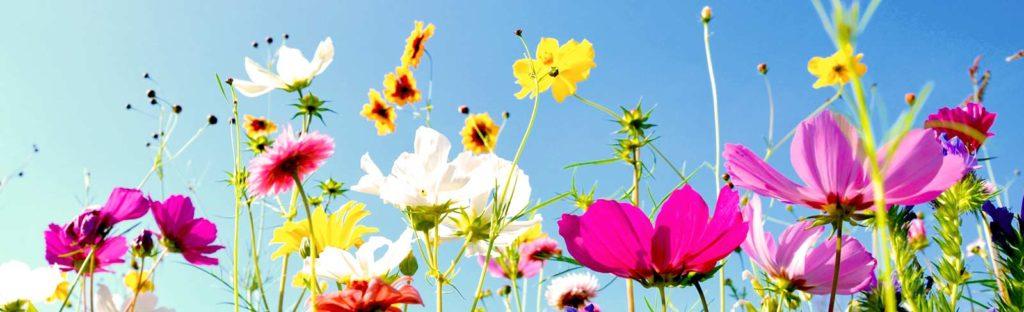 bunte Blumenwiese macht glücklich